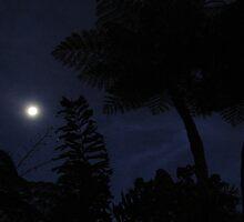 Tropical nite 2 by Lynn  Cropp