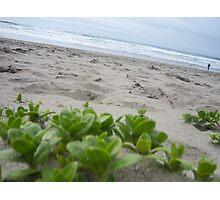 Spin My Sandy World Photographic Print