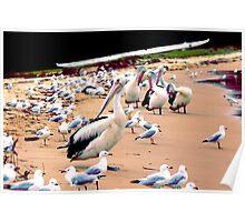 Pelican 4.0 Poster