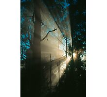 Forest sunrays. Photographic Print