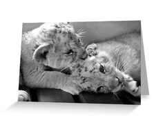 Cub Kisses in B&W Greeting Card