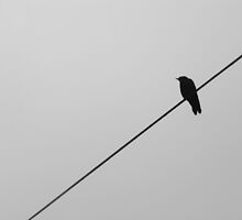 Bird On a Wire by dwknight912
