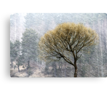14.4.2015: Lonely Tree in Springtime Blizzard Canvas Print