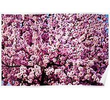 Flowering almond tree Poster