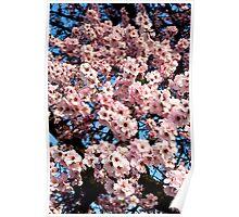 spring... Poster
