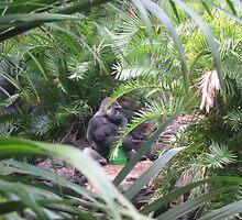 Gorilla by terrebo
