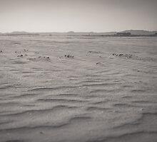 Sands of Eden Estuary by Errne