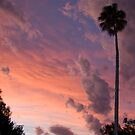 Sunset Palm by Peter Pevy
