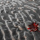 Autumn on the Beach in New England by RonSparks