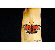 irish peacock Photographic Print