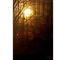 Out of the Forest... Photographic Print