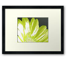 Green Gerber Framed Print