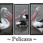 The World Famous Pelican Calendar !! by Lisa  Kenny