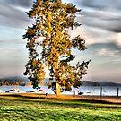 Big Tree In Sun by terrebo