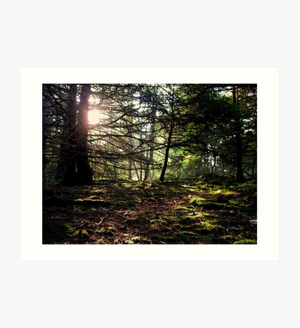 Mossy Woods Art Print