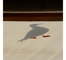 shadow gull Photographic Print