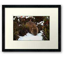 Wombat at Waterfall Valley Hut, Overland Track, Tasmania Framed Print