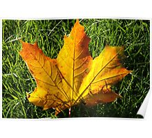 Golden Autumn Leaf Poster