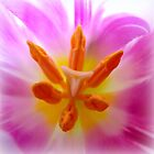 Softly...lilac tulip detail by ©The Creative  Minds