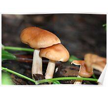 Fungi season 1 Poster