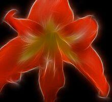 FractAmaryllis by Donna Adamski