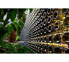 Sauvignon Blanks. Photographic Print