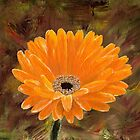 Gerber Daisy by Bob Hardy