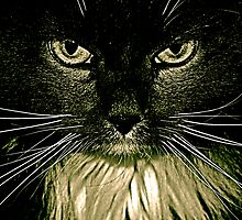Eyes of The Cat by Chris Longwell