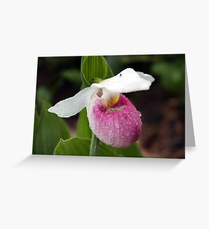 Showy Lady's Slipper Greeting Card