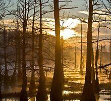 Bayou Awakening by steini