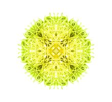 """Spirit of India: Mandala Fleur-Web"" in grass green and yellow by FireFairy"