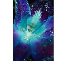 BLUE SINGAPORE ORCHID Photographic Print