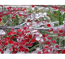 Freezing rain Photographic Print