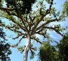 CEIBA - HOLY TREE by Braedene