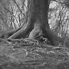 Water Rock Knob Tree Trunk by Chipper