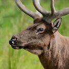 Elk by Art-by-Aelia
