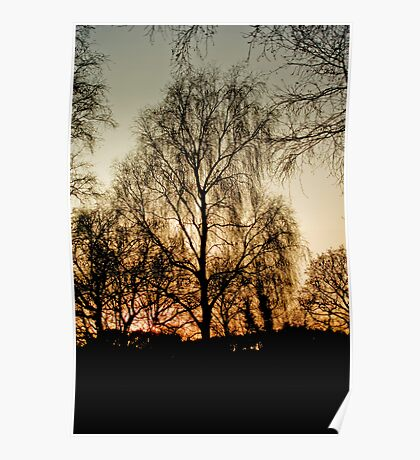 The Sunset Tree Poster