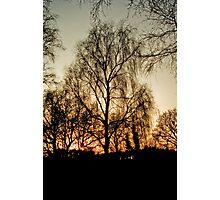 The Sunset Tree Photographic Print