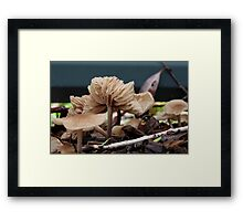Fungi season 2 Framed Print