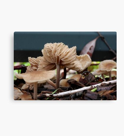 Fungi season 2 Canvas Print