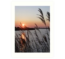 through the reeds Art Print