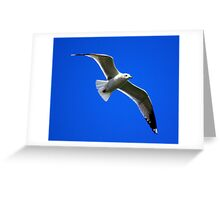 Common Gull #2 Greeting Card