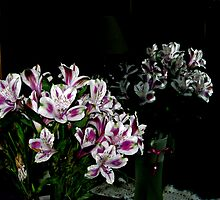 Flowers In The Mirror by Linda Miller Gesualdo