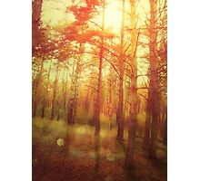 Sunset Forest Photographic Print