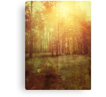 Sunset Forest 2 Canvas Print