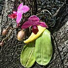 Yard Orchids by GolemAura