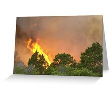 Indrio Savannahs woods fire Greeting Card