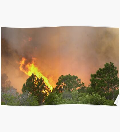 Indrio Savannahs woods fire Poster