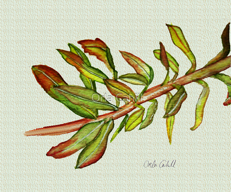 Leafy Stem by Orla Cahill