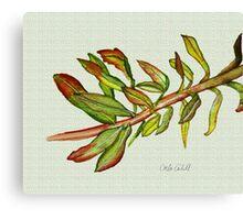 Leafy Stem Canvas Print